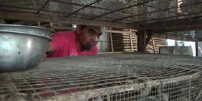 Mantan Petinju Asal Malang Sukses Berjualan Tikus